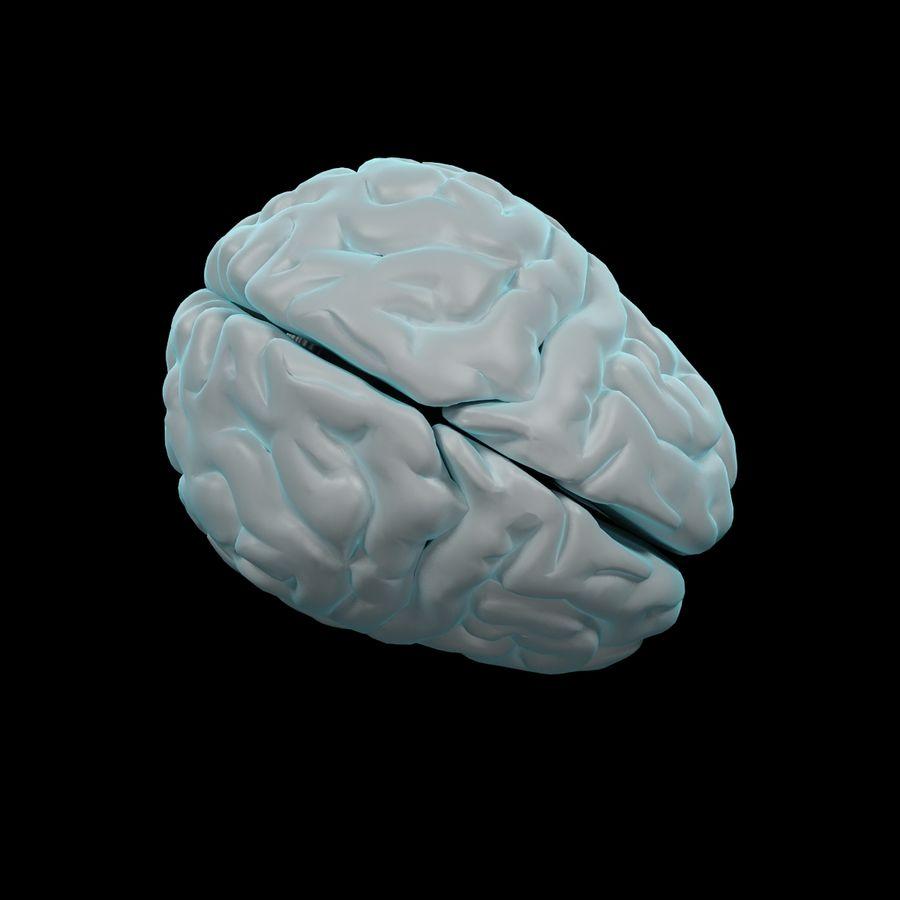 Mänsklig hjärna - Anatomi royalty-free 3d model - Preview no. 10