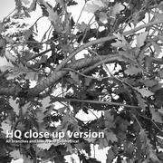 Oak tree HQ model 3d model