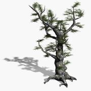 Old Ash Tree 3d model