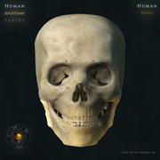 Niezwykle realistyczna czaszka 3d model