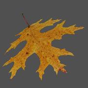 주홍 참나무 잎 노란색 3d model