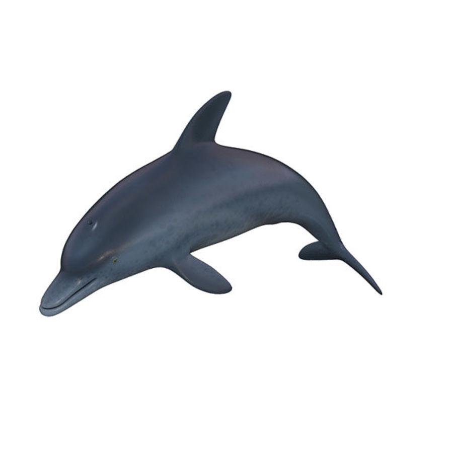 Delphin royalty-free 3d model - Preview no. 2