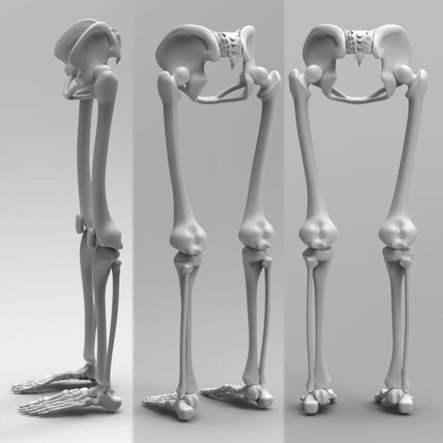 Szkielet Ludzkiej Nogi royalty-free 3d model - Preview no. 3