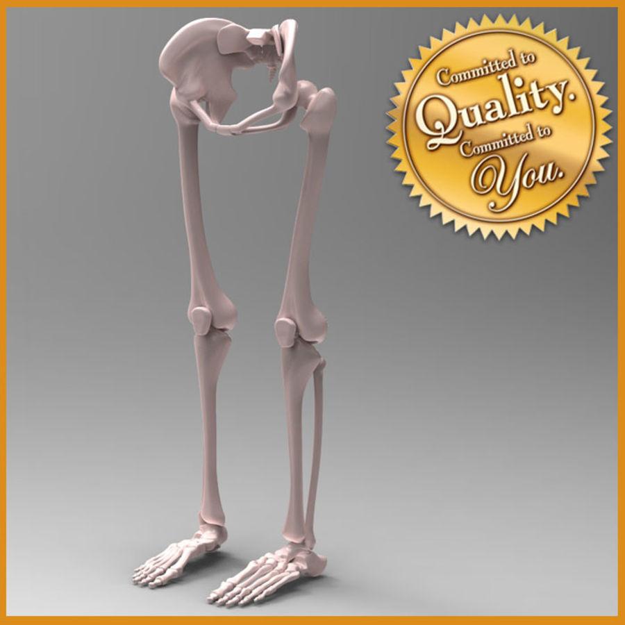 Szkielet Ludzkiej Nogi royalty-free 3d model - Preview no. 1