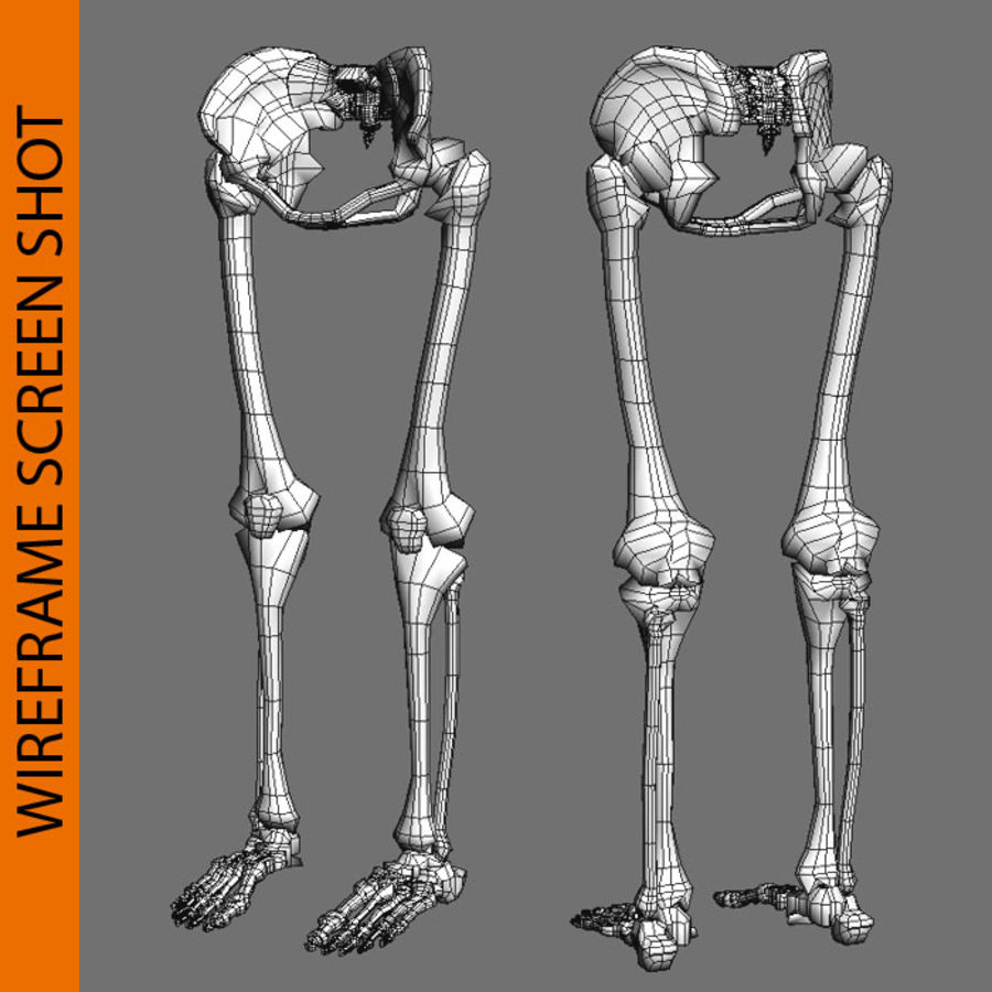 Szkielet Ludzkiej Nogi royalty-free 3d model - Preview no. 7