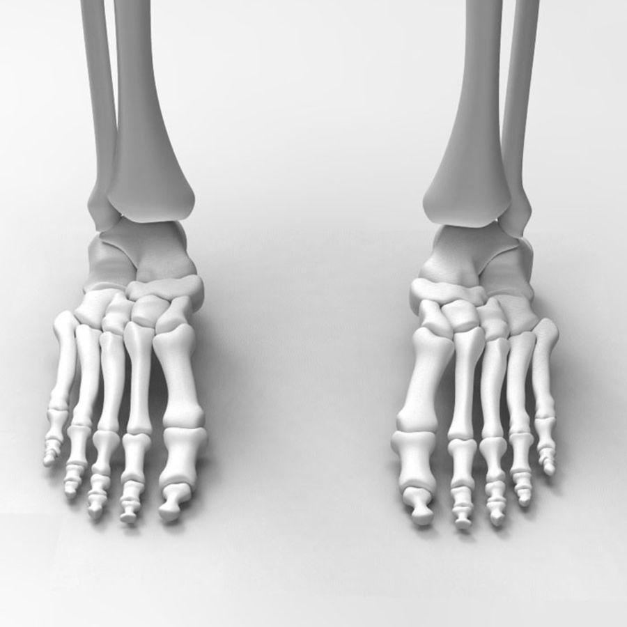 Szkielet Ludzkiej Nogi royalty-free 3d model - Preview no. 6