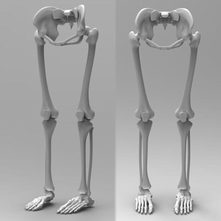 Szkielet Ludzkiej Nogi royalty-free 3d model - Preview no. 2