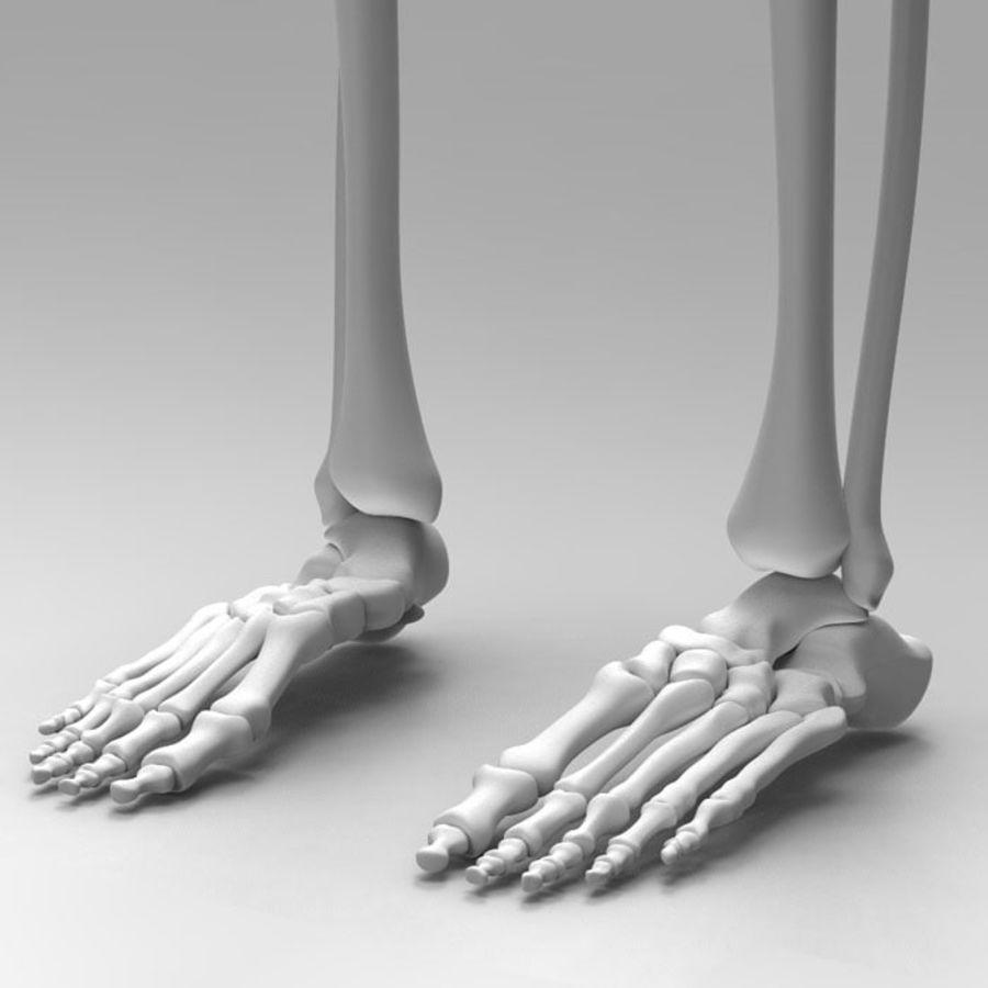 Szkielet Ludzkiej Nogi royalty-free 3d model - Preview no. 5