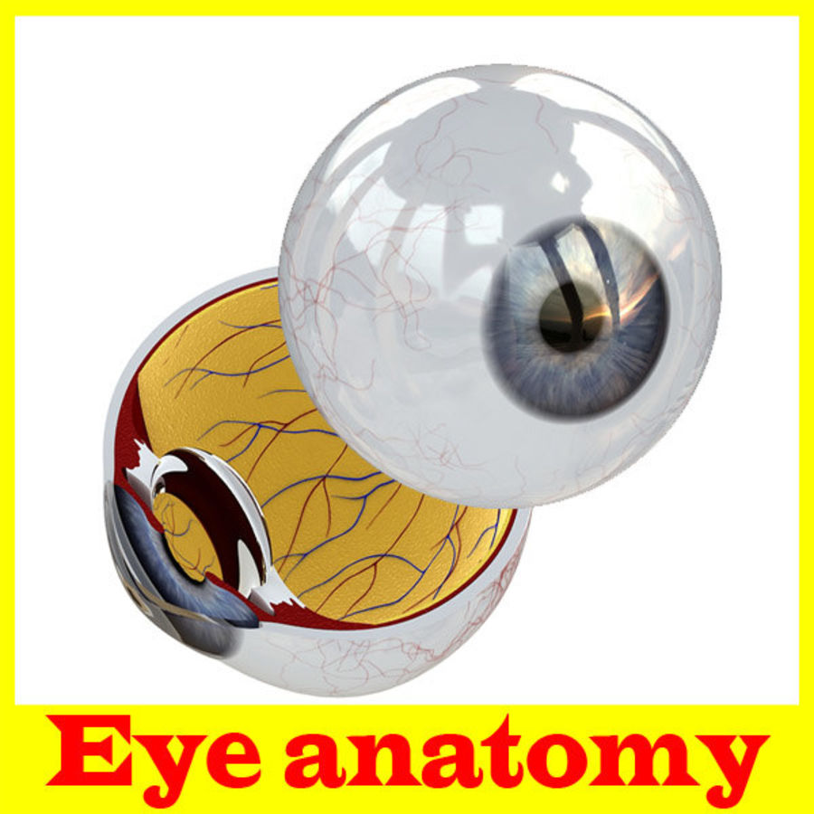 Eye anatomy royalty-free 3d model - Preview no. 1