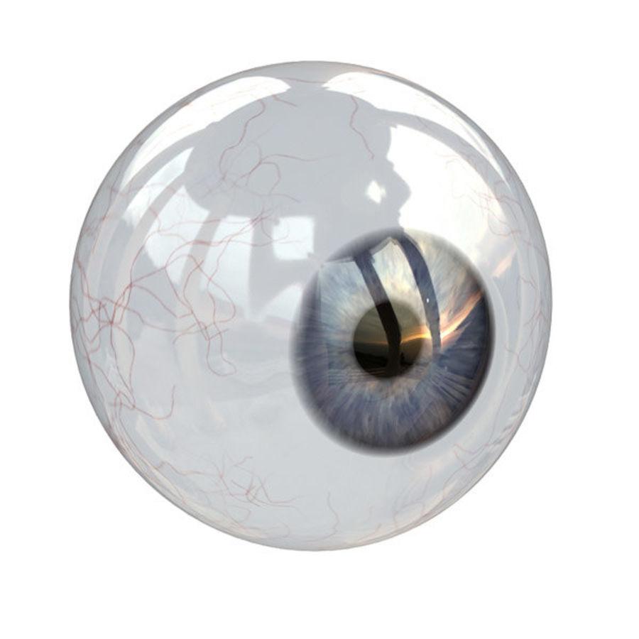 Eye anatomy royalty-free 3d model - Preview no. 2