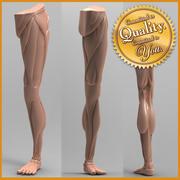 人体腿部解剖学 3d model