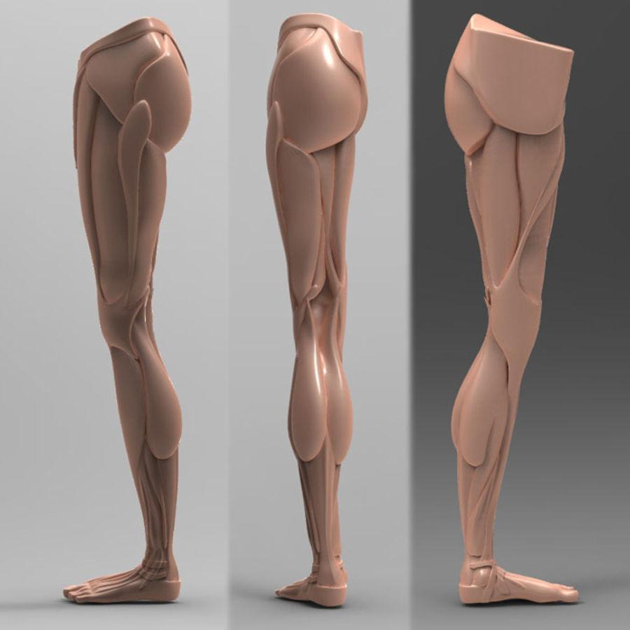 Human Leg Anatomy 3d Model 29 Obj X Fbx 3ds Free3d