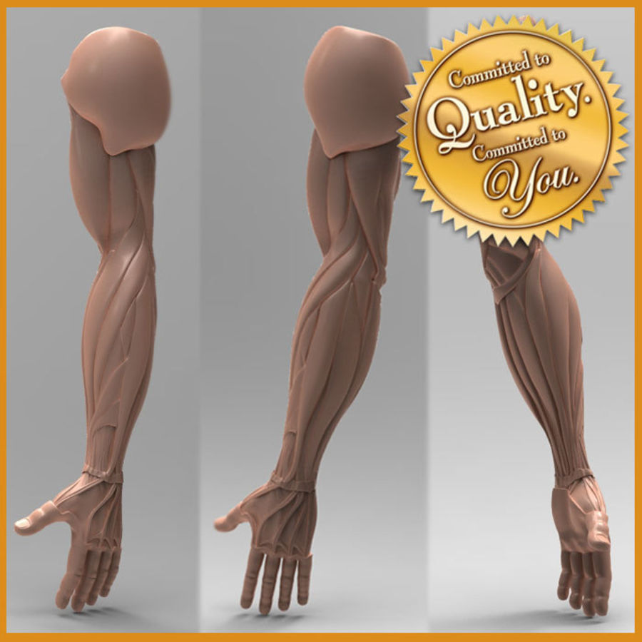 Anatomie du bras humain royalty-free 3d model - Preview no. 1