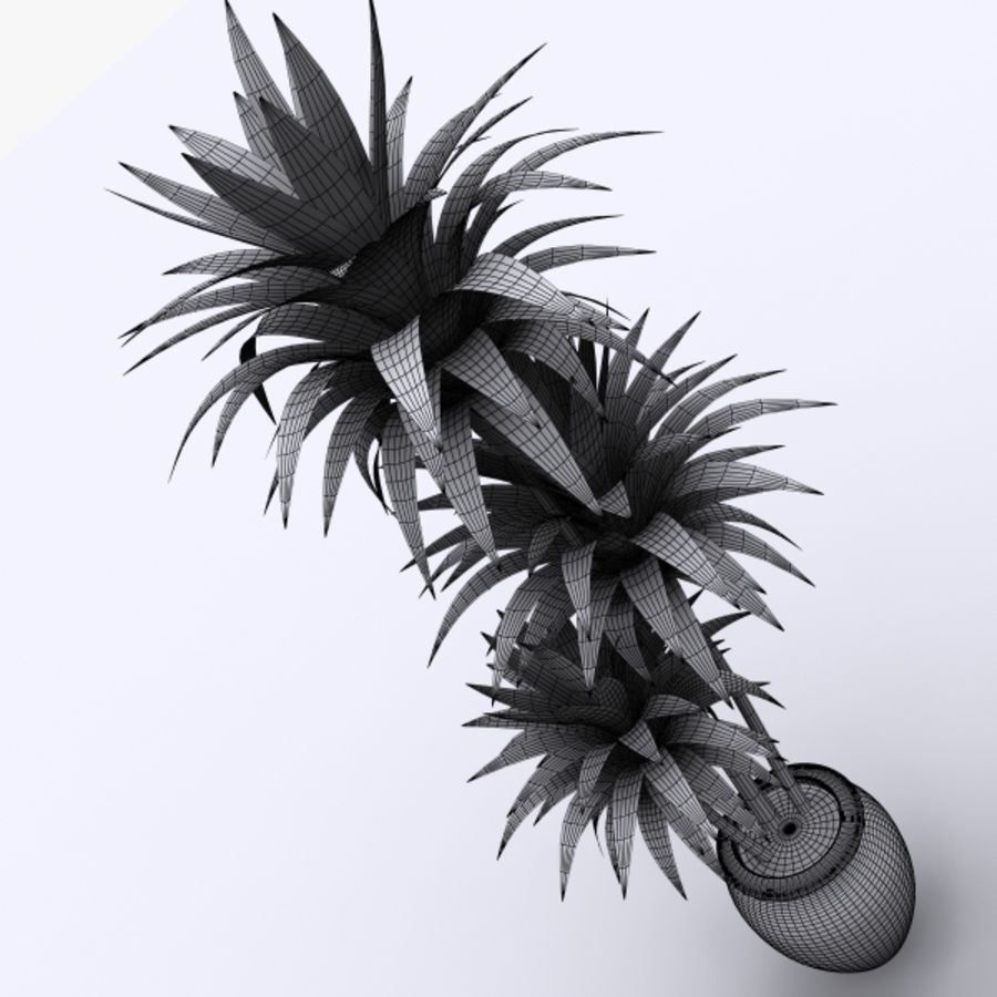 Dracaena Pot plant royalty-free 3d model - Preview no. 5
