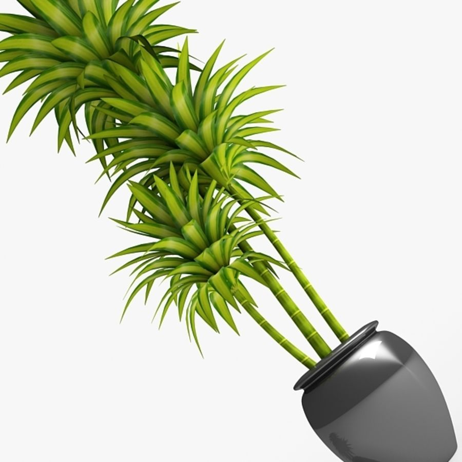 Dracaena Pot plant royalty-free 3d model - Preview no. 4