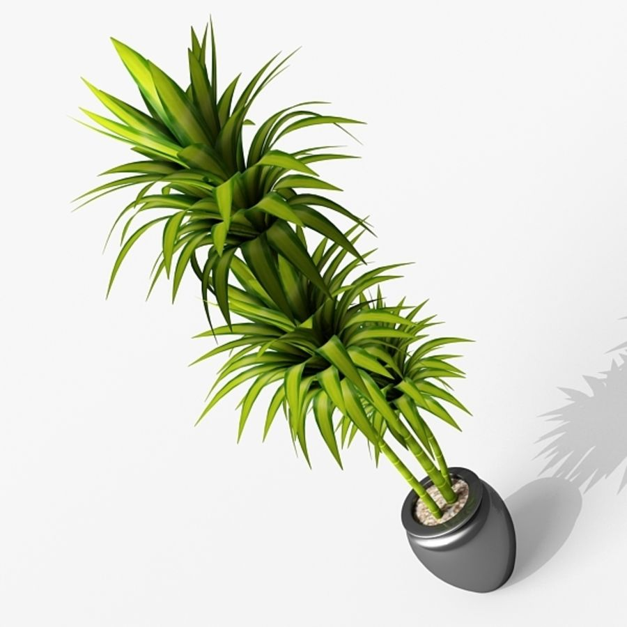 Dracaena Pot plant royalty-free 3d model - Preview no. 2