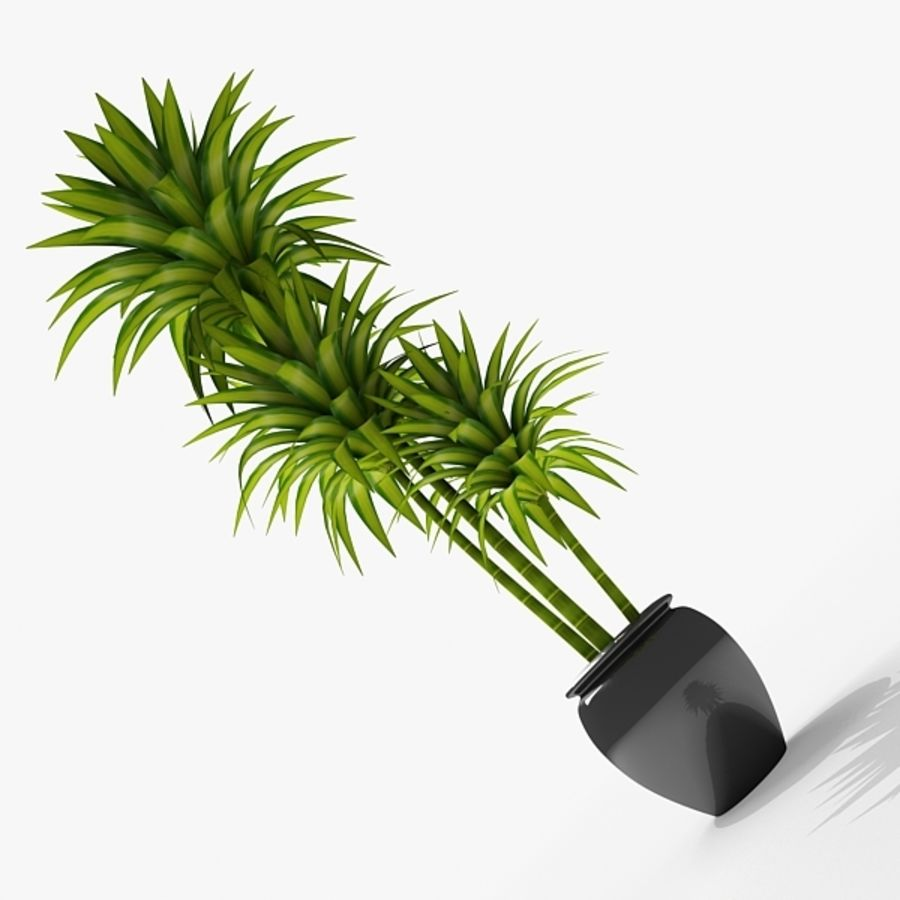 Dracaena Pot plant royalty-free 3d model - Preview no. 1
