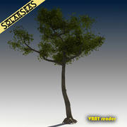 Ahornbaum 3d model