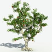 Jabłoń 3d model