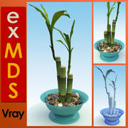 Planta de casa de bambu (vray) 3d model