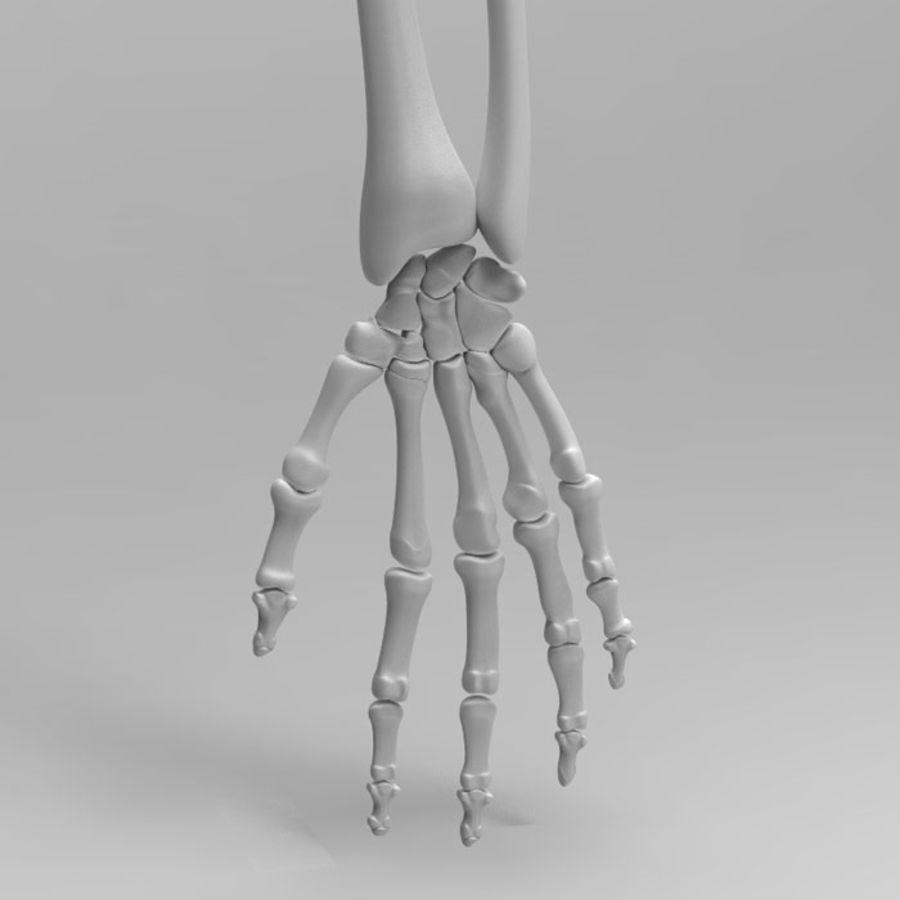 Human Arm Skeleton 3D Model $29 -  obj  max  ma  fbx  3ds
