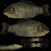 peixe 3d model