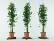 arbusto de bambu 3d model
