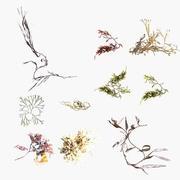 Deniz yosunları 3d model
