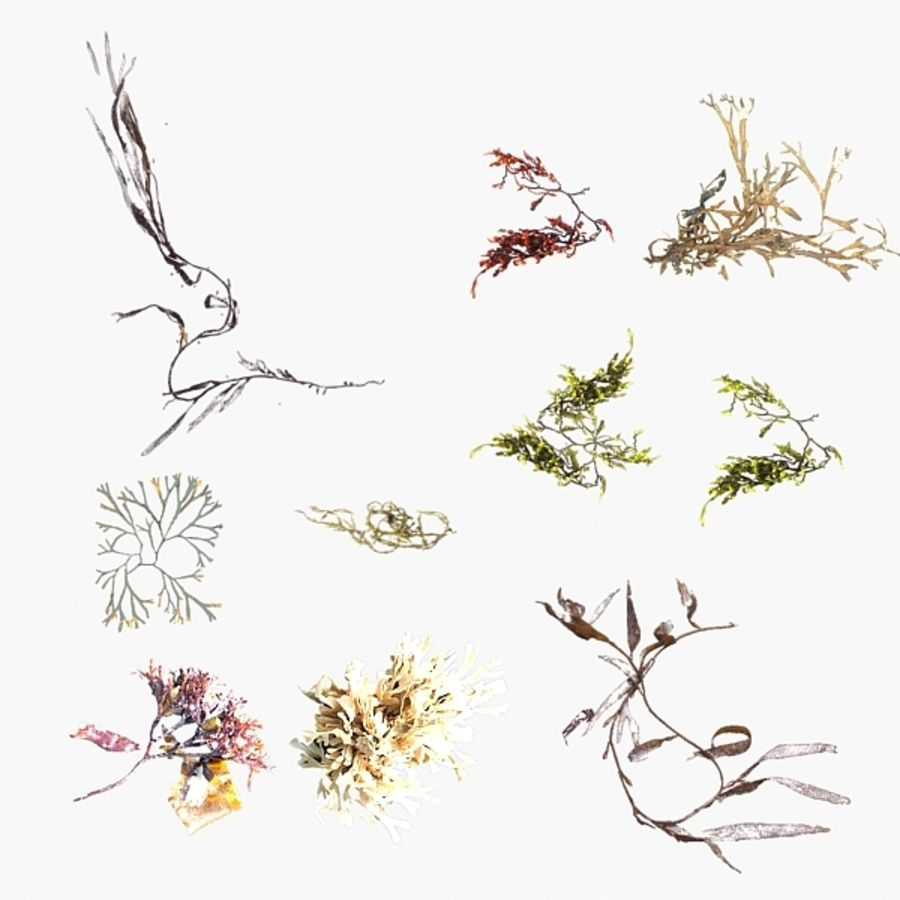 Seaweeds royalty-free 3d model - Preview no. 1