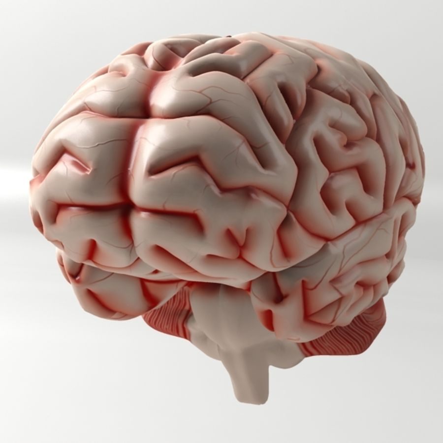 Brain 3D Model $12 - .obj .3ds .max .oth - Free3D