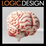 脑 3d model