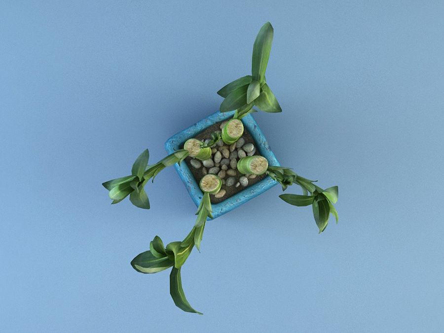 Dracaena royalty-free 3d model - Preview no. 6