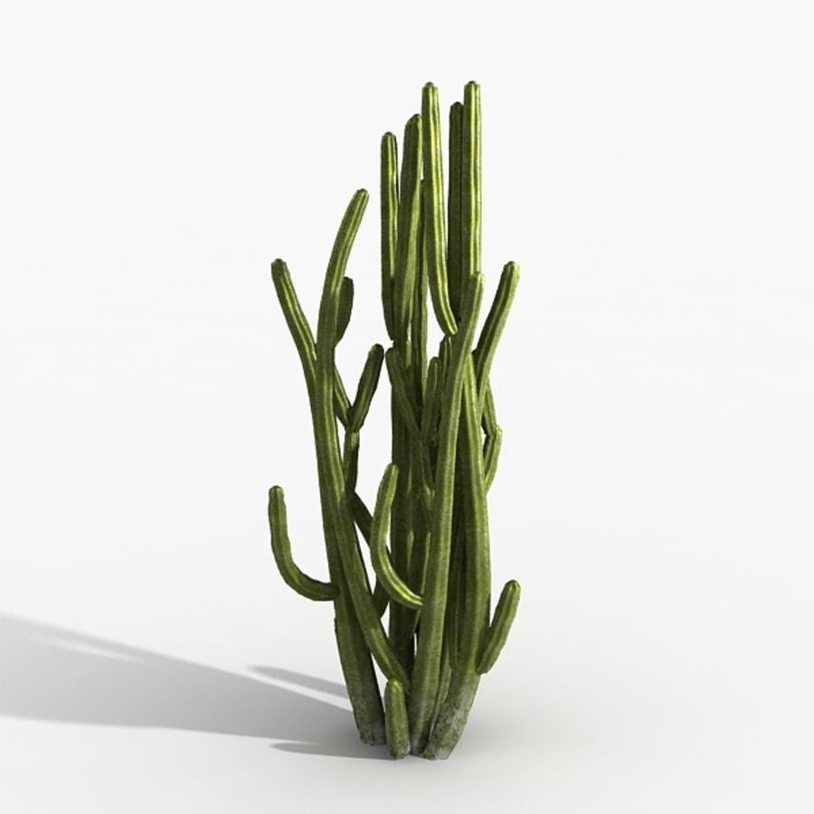 Planter un arbre de cactus royalty-free 3d model - Preview no. 3