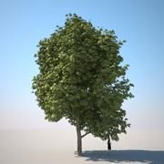 HQ植被 - 板栗树 3d model