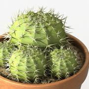 Barrel Cactus 3d model