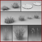 Su bitkileri 3d model