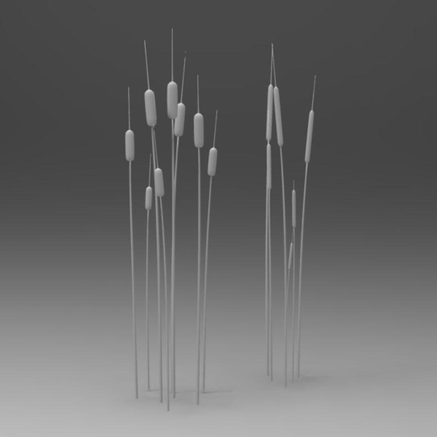 Rośliny wodne royalty-free 3d model - Preview no. 5