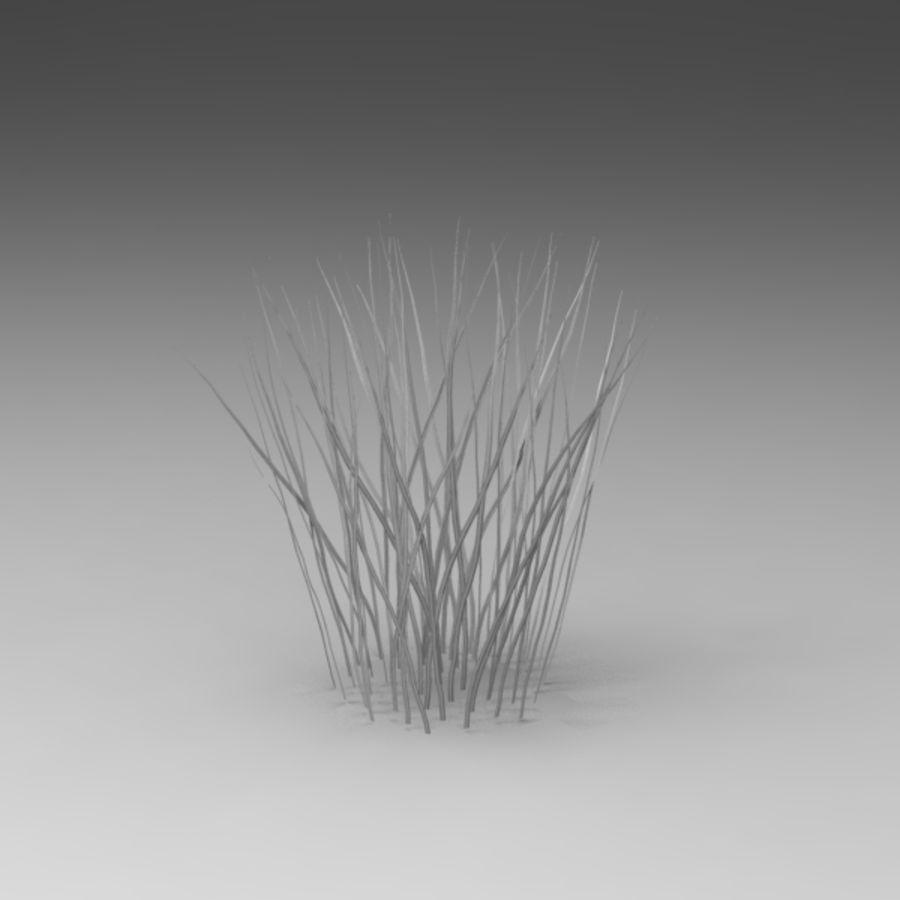 Rośliny wodne royalty-free 3d model - Preview no. 4