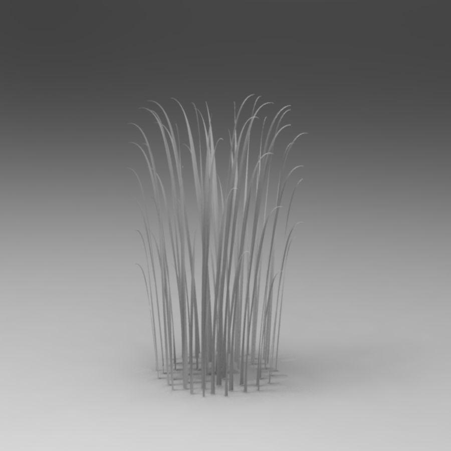 Rośliny wodne royalty-free 3d model - Preview no. 3