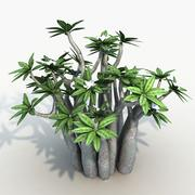Plante pachypodium 3d model