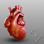 İnsan kalbi 3d model