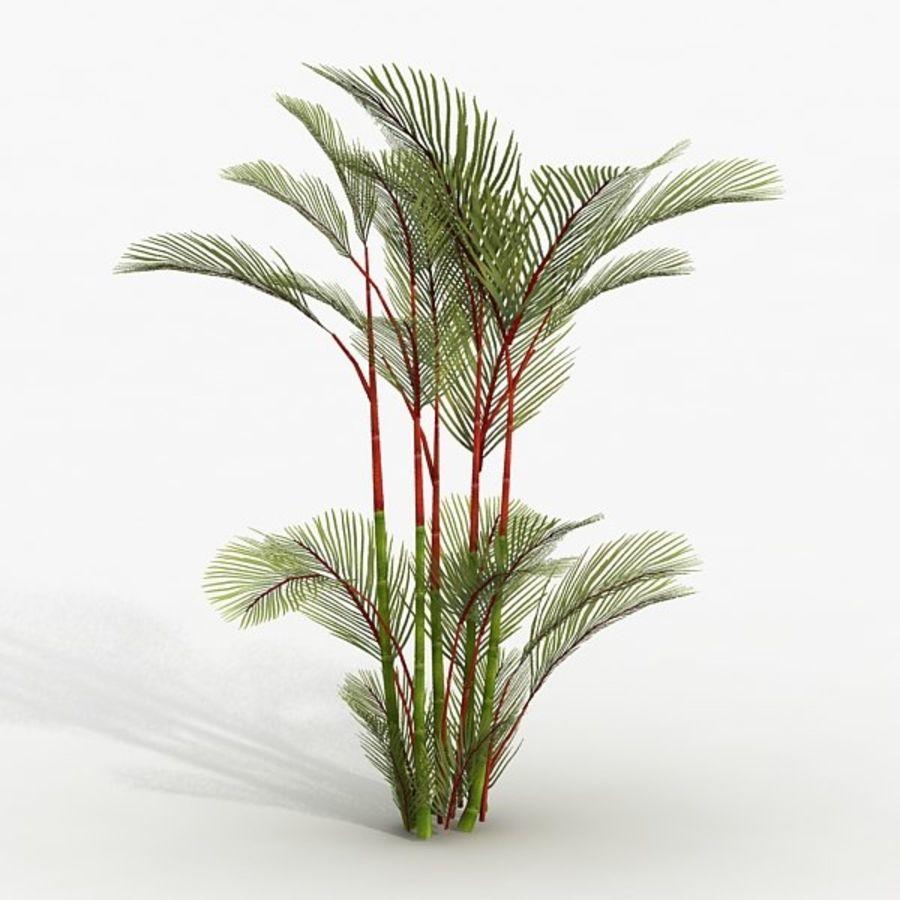 Plant Red Palm 3D Model $25 -  obj  max  fbx - Free3D