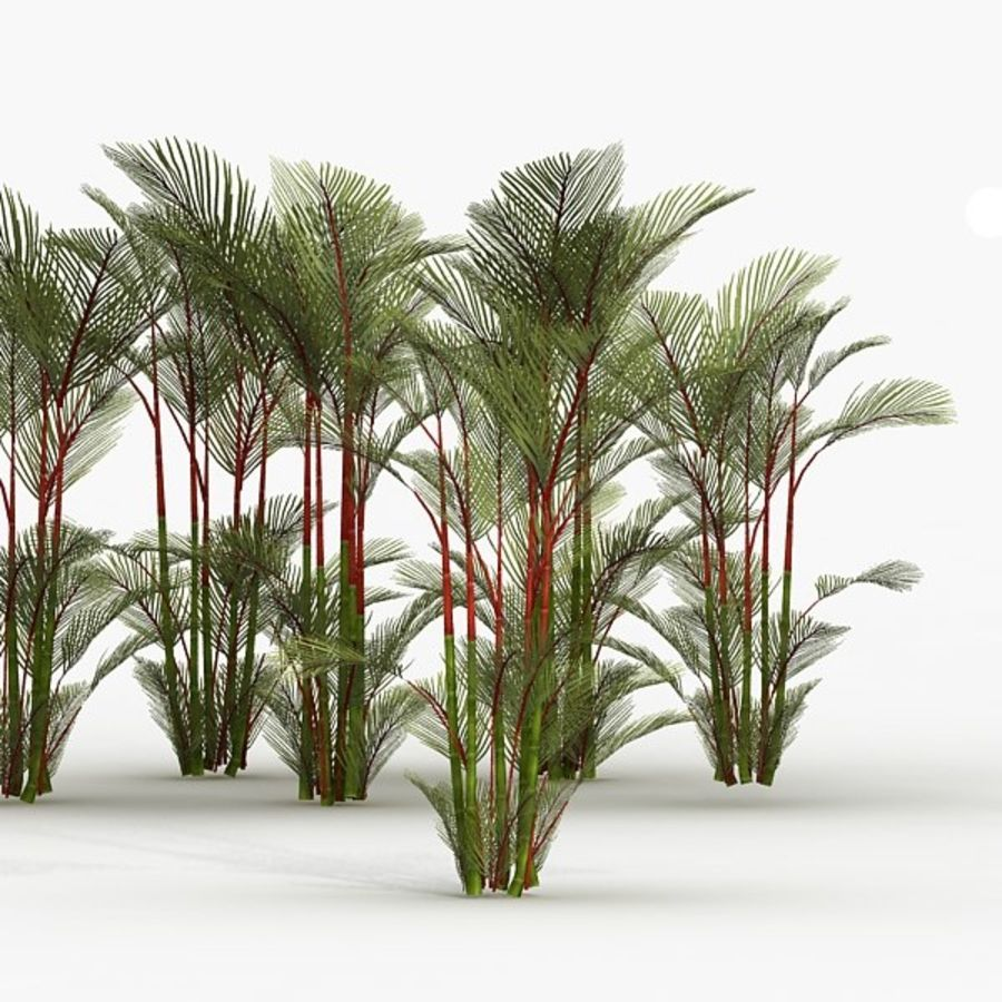 Plant Red Palm royalty-free 3d model - Preview no. 4