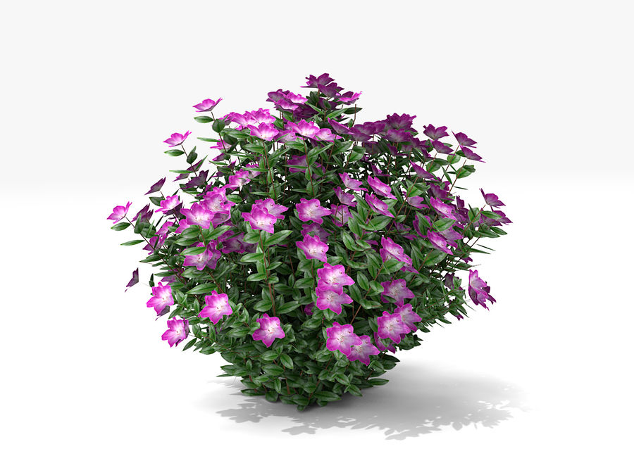 Plante avec fleur royalty-free 3d model - Preview no. 2