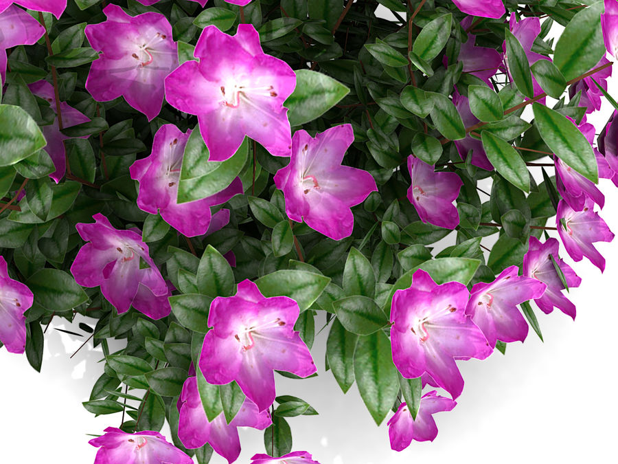 Plant With Flower royalty-free 3d model - Preview no. 6