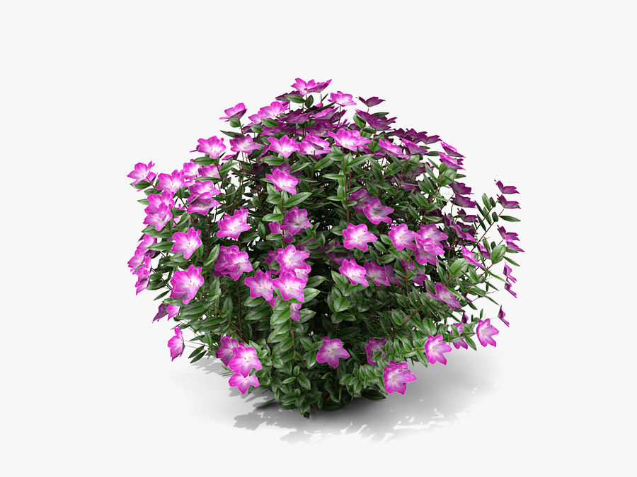 Plante avec fleur royalty-free 3d model - Preview no. 1
