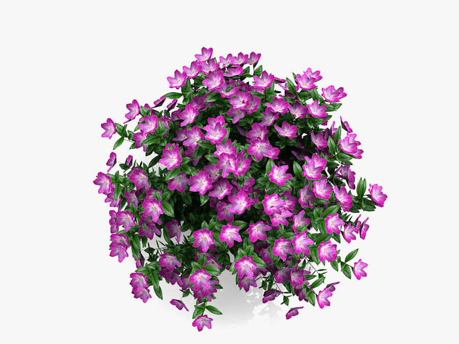Plante avec fleur royalty-free 3d model - Preview no. 5