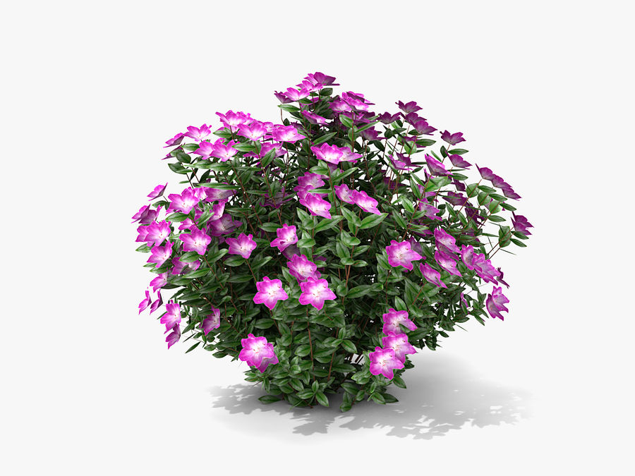Plante avec fleur royalty-free 3d model - Preview no. 3