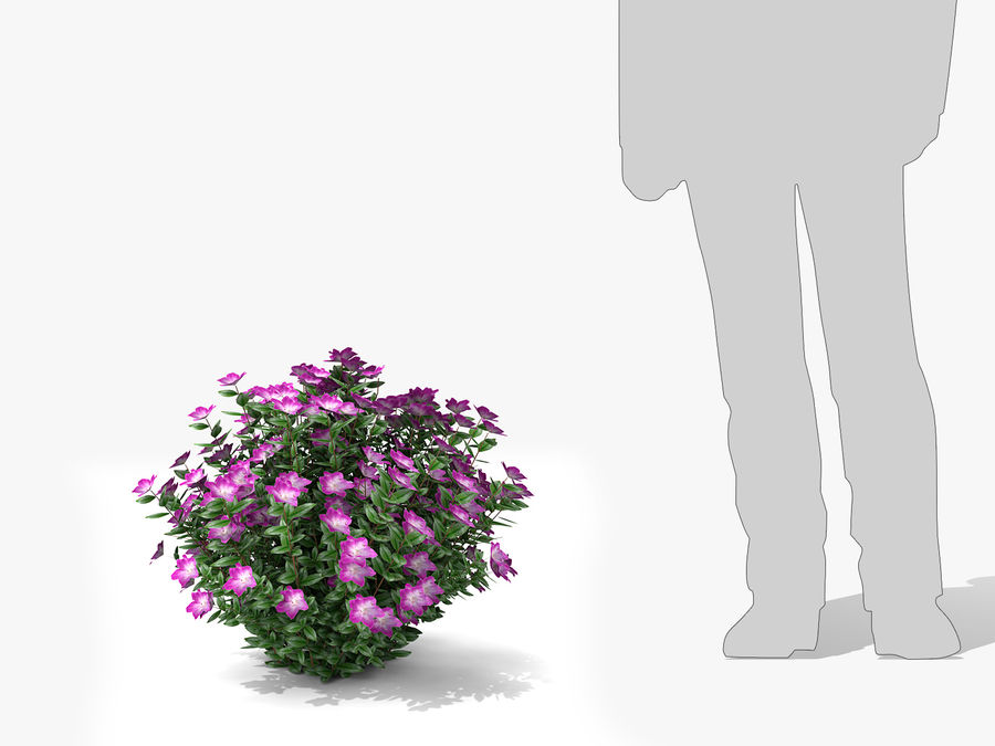 Plante avec fleur royalty-free 3d model - Preview no. 7