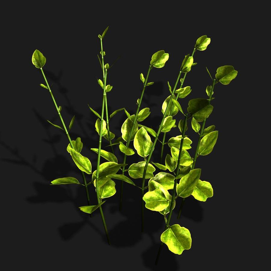 petite plante royalty-free 3d model - Preview no. 2